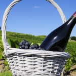 bottle of red wine and grappes in basket in France